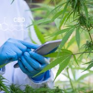 How to Start a Successful Cannabis Wholesale Company